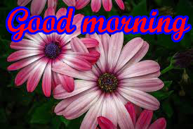 Special Good Morning Images hd download