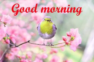 Spring Good Morning Images
