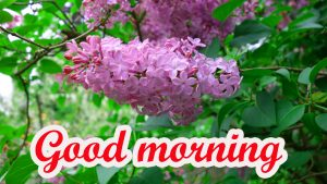 Spring Good Morning Images Wallpaper Pictures