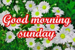Sunday Good Morning Images Pics Photo HD