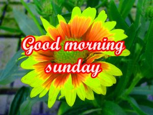 Sunday Good Morning Images Wallpaper Pics