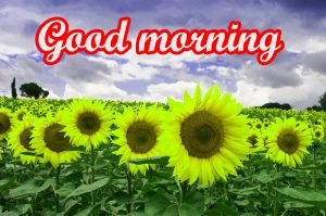 Tuesday Good Morning Images
