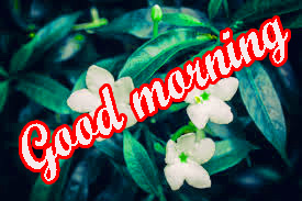 Tuesday Good Morning Images Wallpaper Pictures Download