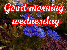 Wednesday Good Morning Images Wallpaper Pics HD Download