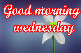 Wednesday Good Morning Images Pictures HD Download