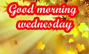 Wednesday Good Morning Images Photo Pics Download