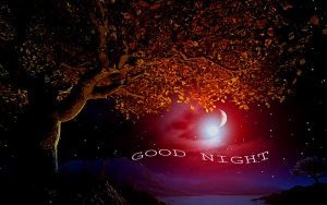 Good Night Images Photo Pictures Wallpaper Pics HD Free Download