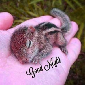 Hindi Good Night Message Images Pictures Download