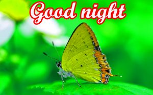 Beautiful Good Night Images Photo HD Download
