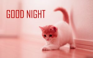 Cute Good Night Images Photo Pics For Whatsaap