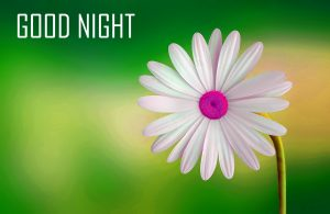 Flower Good Night Images Wallpaper In Hindi For Whatsapp