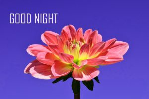 Good Night Images Photo Wallpaper With Flower HD Download
