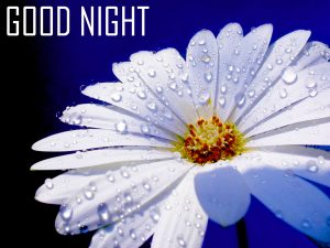 Good Night Images Photo Wallpaper Pictures Pics HD Free Download