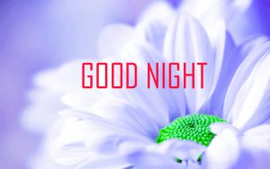 Good Night Images Photo Pics Wallpaper Pictures HD Download For Whatsapp