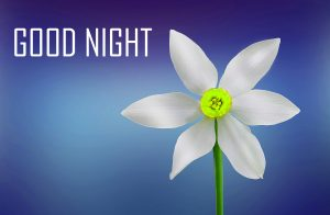Good Night Images Pictures Wallpaper Photo Pics HD Free Download