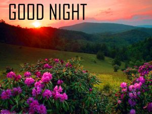 Friends Good Night Photo Pics Free Download