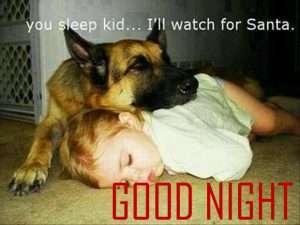 Funny Good Night Images Wallpaper Pictures Downloadfor Whatsapp