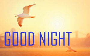 Friends Beautiful Good Night Images Pics Download