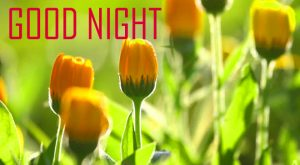 Good Night Images Wallpaper Free Download With FLOWER