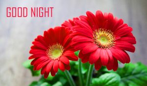 Good Night Images Pictures With Flower