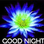 Latest Good Night Images Photo Pictures Free Download