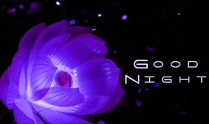 gdnt / good night Images Pictures Free Download