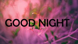 new good night images Photo Pictures Free Download