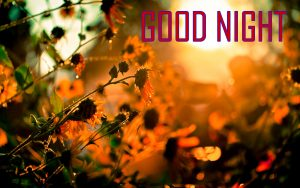 Good Night Images Pictures Free Download For Whatsaap