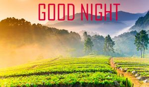 Friends Good Night Pictures Download