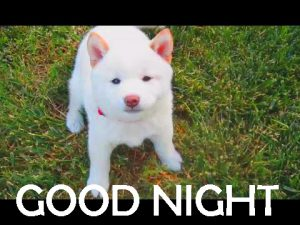 Latest Good Night Images Wallpaper Pictures Download