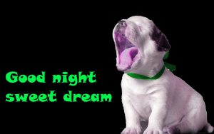Funny Good Night Images Wallpaper Free Download