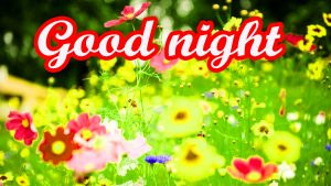 Amazing Good Night Images Pics HD Download