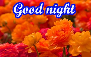 Her Good Night Images Photo Pics HD Download