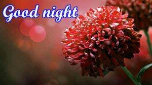 Flower Good Night Images Wallpaper Photo HD Download
