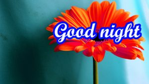 Flower Good Night Images Pics Photo Wallpaper
