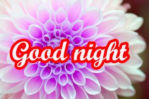 Flower Good Night Images Pics HD Download
