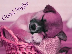 Good Night Wishes Images Photo Downlaod