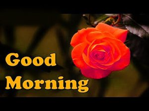 Friday Good Morning Images Pics Wallpaper Photo Download