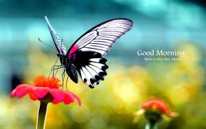 Butterfly Good Morning Images Wallpaper Pics HD