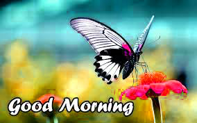 Butterfly Good Morning Images Photo Wallpaper HD