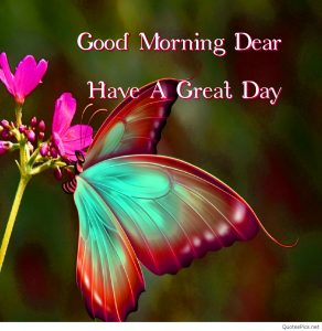 78 Butterfly Good Morning Images Photo