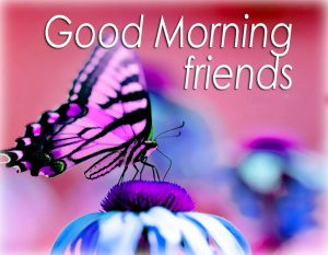 Butterfly Good Morning Images Wallpaper Pics Photo