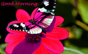 Butterfly Good Morning Images Wallpaper Photo HD