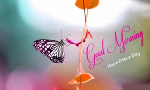 Butterfly Good Morning Images Photo Wallpaper Pics