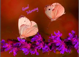 Butterfly Good Morning Images Photo Pics Download for Whatsaap