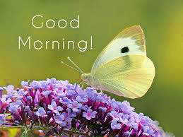 Butterfly Good Morning Images Pictures Photo HD Download