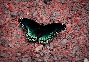 Butterfly Good Morning Images Photo Wallpaper Pictures HD Download