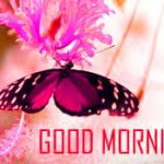 78+ Butterfly Good Morning Images Photo