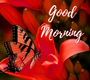 Butterfly Good Morning Images Wallpaper Pics Download