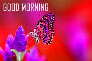Butterfly Good Morning Images Photo Wallpaper HD Download